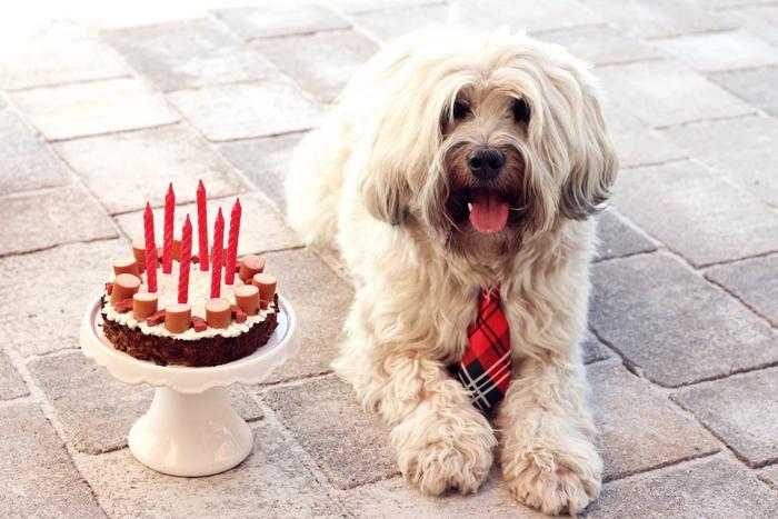Hackfleisch Wurstchen Torte Fur Den Hunde Geburtstag Fashion Kitchen