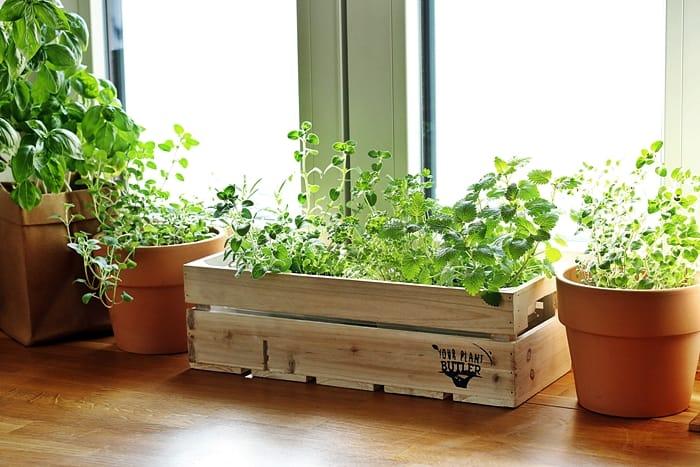 So Legst Du Einen Kräutergarten In Der Küche An