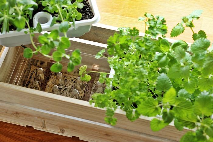 so legst du einen Kräutergarten in der Küche an - Fashion ...