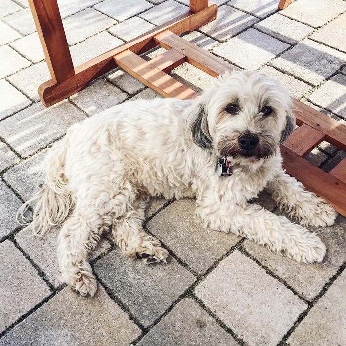 Zwei Jahre ohne dich… Todestag Max Tibet Terrier Fashionkitchen