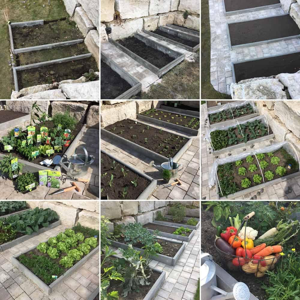 Gemüsebeete im Garten anlegen, bepflanzen & pflegen
