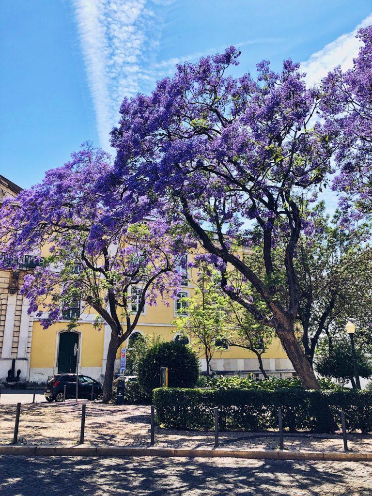 Roadtrip durch Portugal-fashionkitchen-lissabon-altstadt-lila bäume