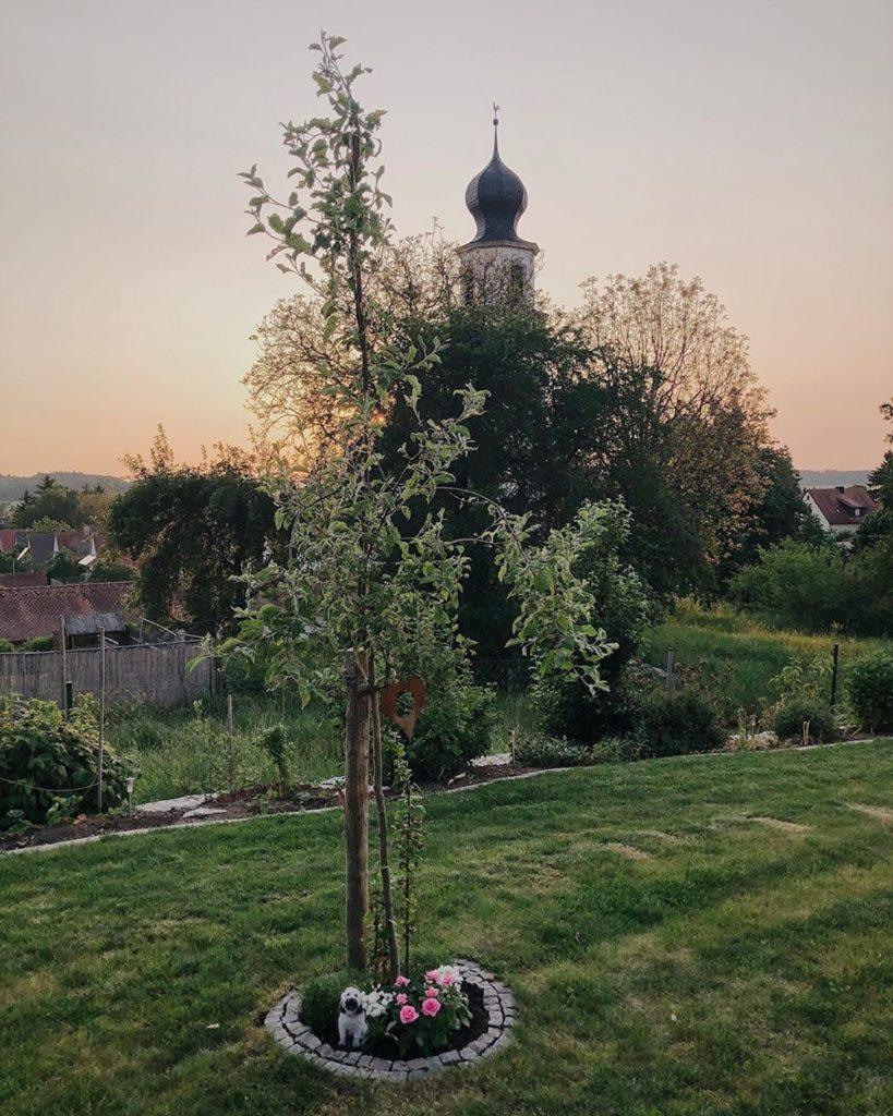 Max Wuschelhund Tibet Terrier Todestag Apfelbaum Beerdigung