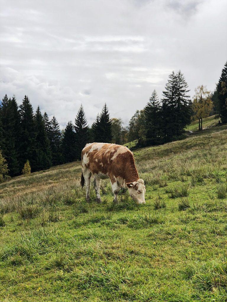 Holzhotel Forsthofalm, Asitz Panoramaweg & Schaubergwerk in Leogang - Österreich