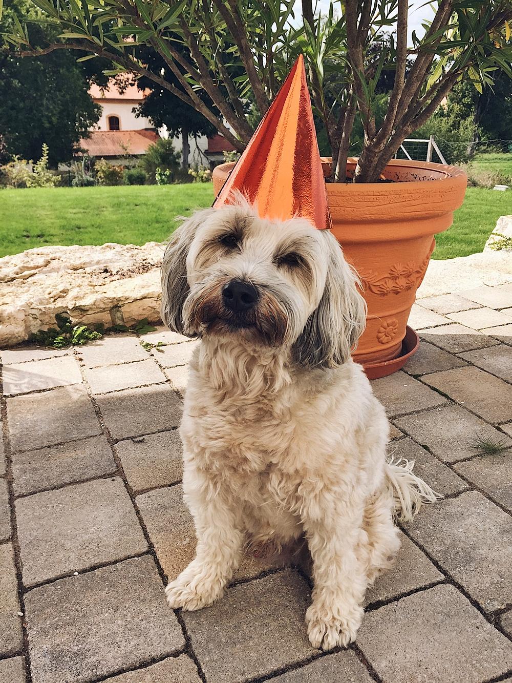 22.08.2020 – heute wäre Max 11 Jahre alt geworden